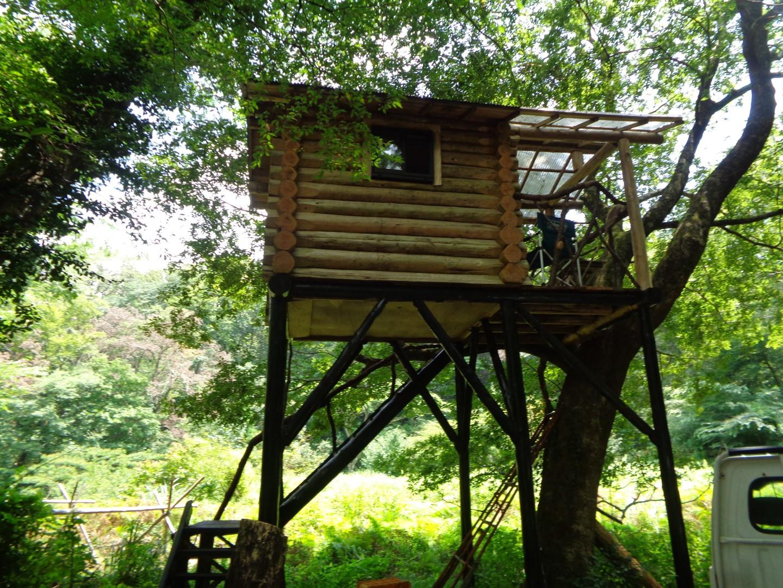 ツリーハウス 自然体験 野生の森